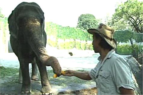 """Trivia King Kim Atienza meets elephant Mali at the Manila Zoo on """"Matanglawin""""."""